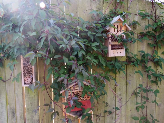 Insect Nesting boxes