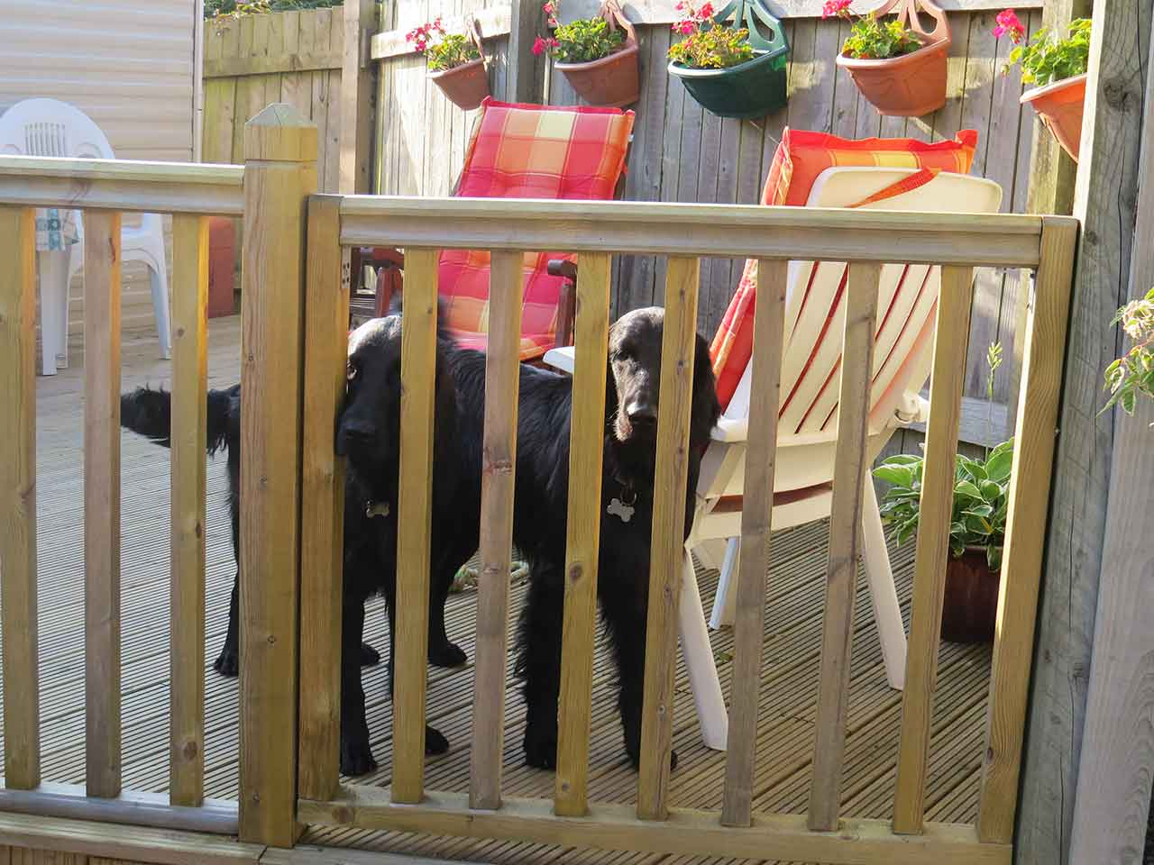 Dogs on Caravan Decking